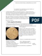 Practica 2 Bioquimica Francisco