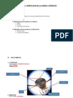 PRÁCTICA-N1-entomologia