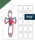 Sistem Peredaran Darah Dan Pathway