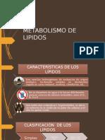 metabolismo lipidos