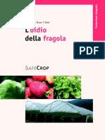 2005 Oidio Della Fragola