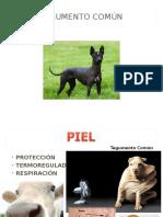 Estesiologia animal