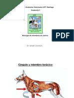002-2012 AV2 Miologia Mb Canino