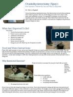 educational program 2 - importance of post-operative care