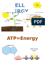 cell energy general biology