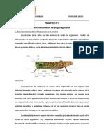 Reconocimiento de plagas agricolas