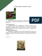 Cultura Agricola.docx