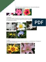 10 Tipos de Flores