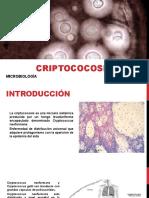 CriptoCocosIs