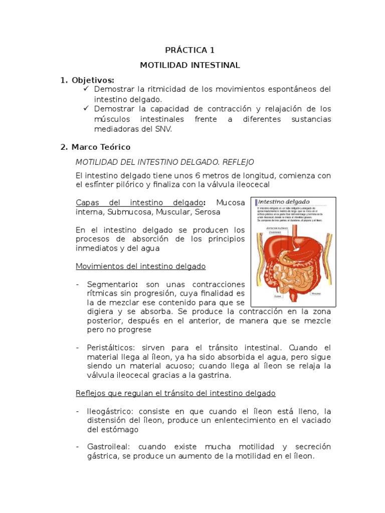 Motilidad Intestinal - Digestivo