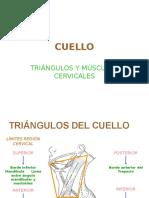 cuello Regiones y Músculos