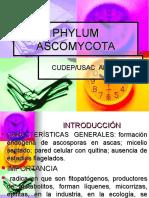(9) PHYLLUM ASCOMYCOTA