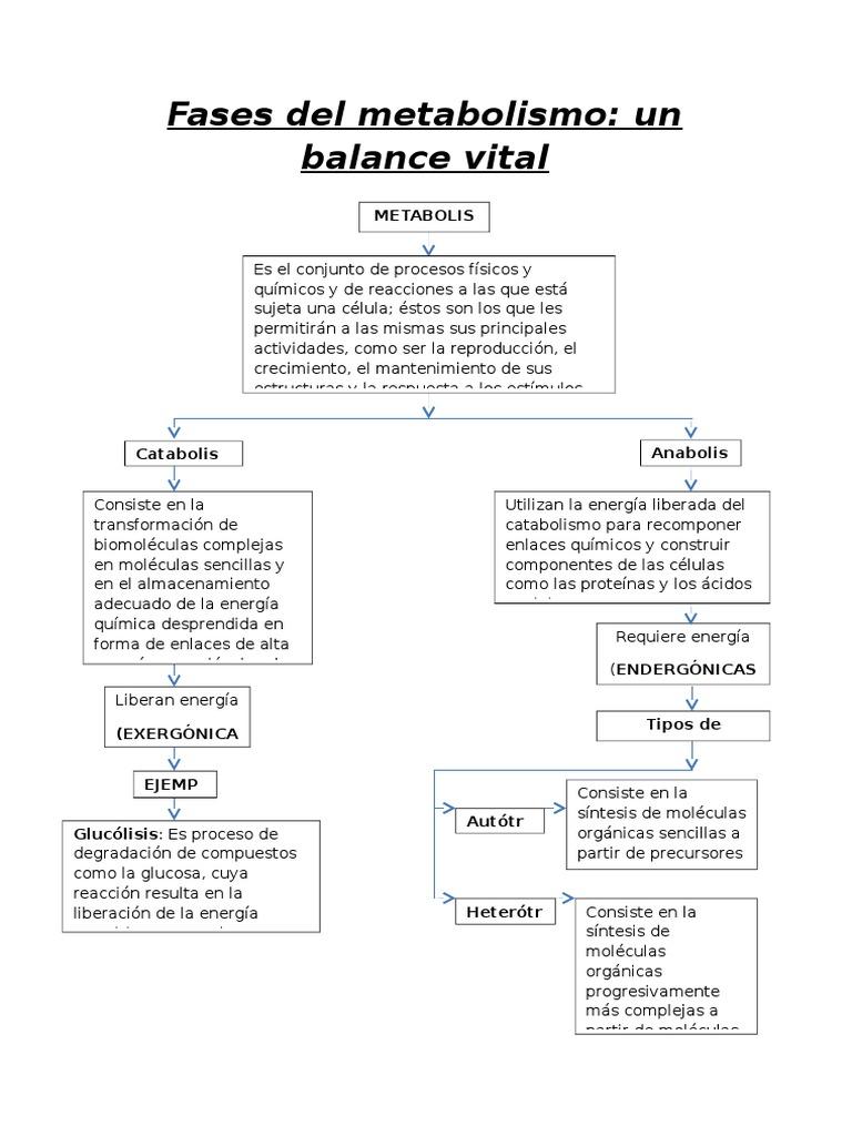 Qué Son Las Vitaminas Hidrosolubles Y Liposolubles