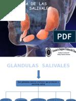 patologadelasglndulassalivales-130523122315-phpapp01