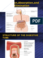 Digestion,Absorption,And Elimination