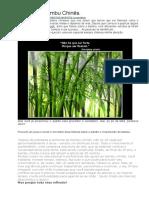 A Lição Do Bambu Chinês