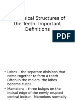 Imp Definitions of Anatomical Structures of Teeth