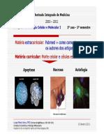 BMC_I_-_Morte_celular__(3+4_aulas_10_Jan_2011)_vf.pdf