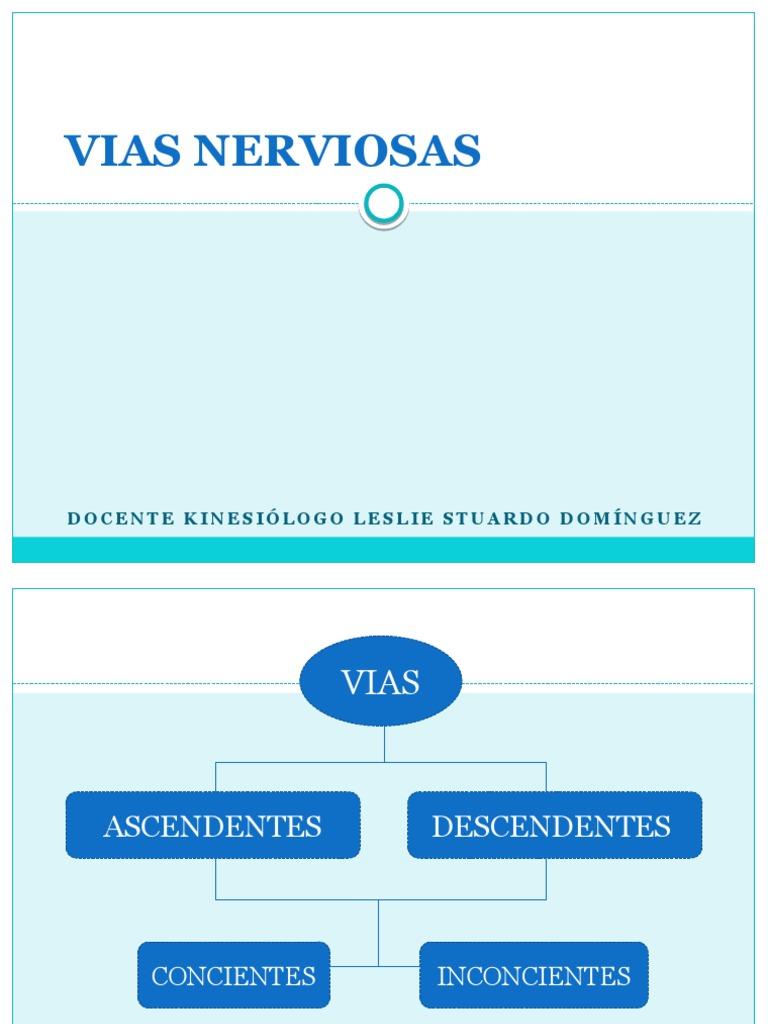 3.- Vias Nerviosas