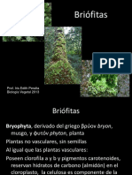 Clase 21 Biodiversidad Briofitas Pteridofitas Gimnospermas