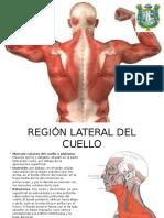 Musculos Del Cuello y Torax
