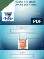 Anatomiadelabdomen 151025002553 Lva1 App6892