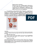 VASKULARISASI Dan Persarafan Ureter