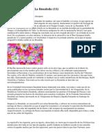Article   Floristería La Rosaleda (11)