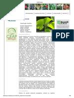 Catálogo de Palmeiras CEAP Design