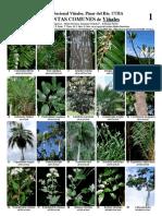 plantas de cuba