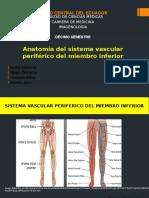 Anatomía Vascular Periférica de Miembro Inferior