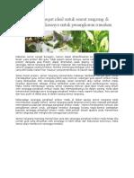 Makanan dan tempat ideal untuk semut rangrang di alam dan modifikasinya untuk penangkaran rumahan.docx