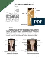 capítulo 3 Osteologia