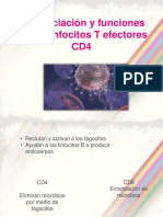 Diferenciación y Funciones de Los Linfocitos T Efectores