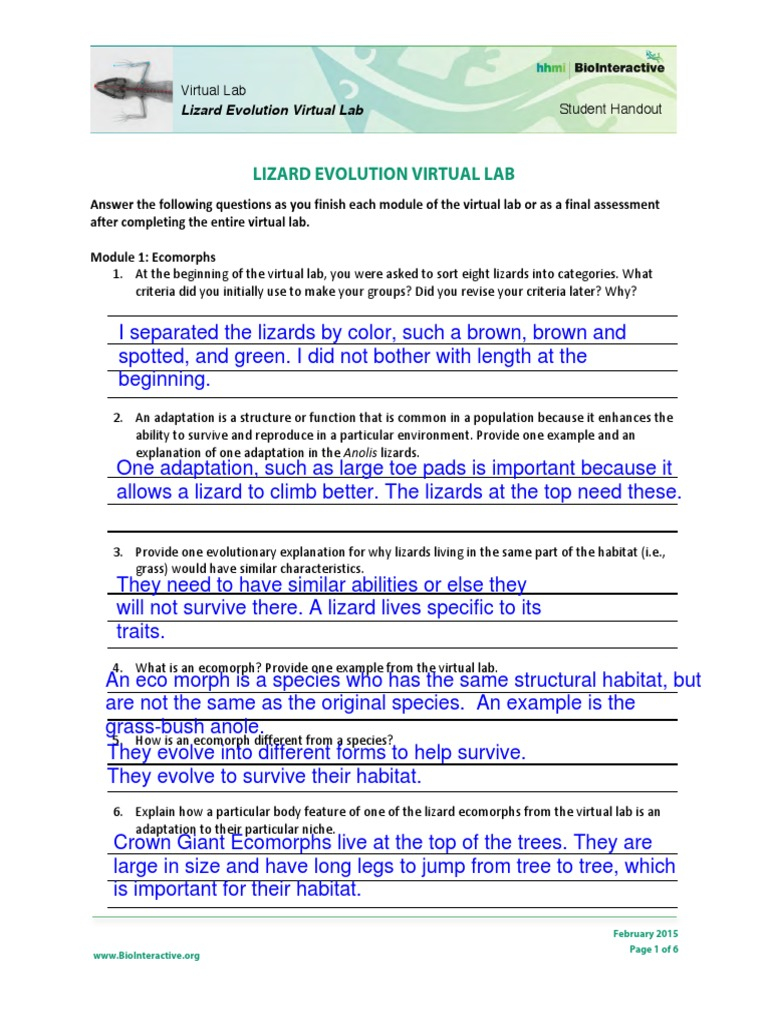 lizard evolution virtual lab student worksheet 1 adaptation evolution. Black Bedroom Furniture Sets. Home Design Ideas