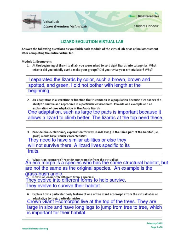 lizard-evolution-virtual-lab-student-worksheet 1 ...