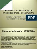 Aislamiento e Identificacion de Microorganismos en Una Muestra