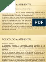4. Semanas Toxicología Ambiental