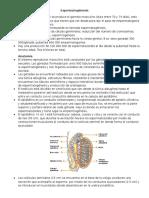 Resumen Espermatogénesis