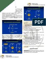 Endocrinologia 1