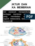 AFF Membran Biologi 2010