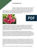 Article   Floristería La Rosaleda (21)