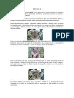 koala2.pdf