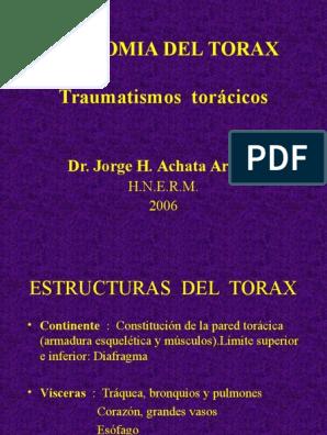 Anatomia Del Torax Traumatismos Torácicos