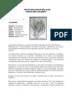 Aspectos Biologicos de Gracilaria Chilensis