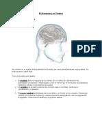 El Alzheimer y El Cerebro