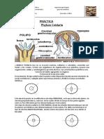 Phylum Cnidaria I