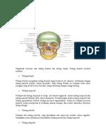 Anatomi Tengkorak