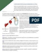 MECANISMO DE ACCIÓN DE LOS ANTICUERPOS MONOCLONALES INHIBIDORES DE LA PCSK9