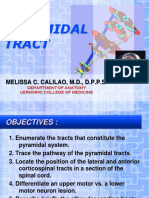 Pyramidal 2012 PDF